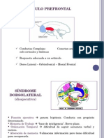 EXPO prefrontal.ppt