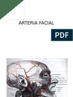 Arteria Facial y Occipital