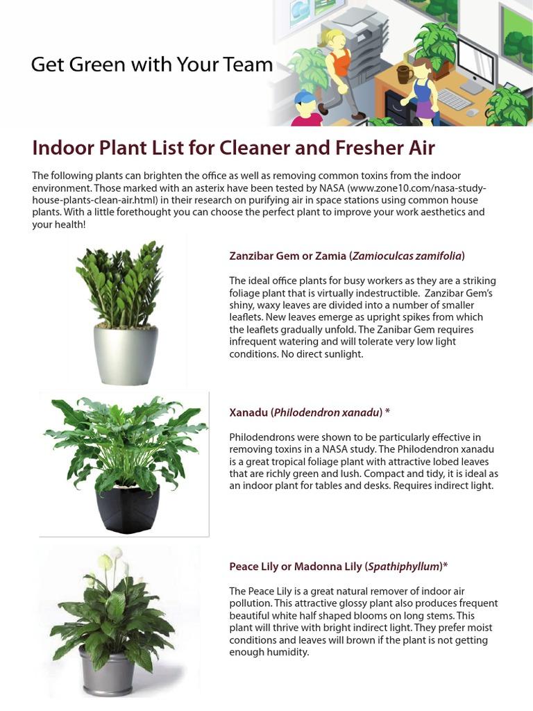 Plants For Office | Fern | Plants