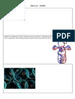 Fluid Worksheet