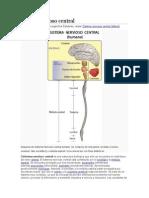 Istema Nervioso Central