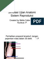 Praktikum Anatomi
