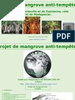 Projet de Mangrove Anti-tempete
