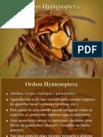 Hymenoptera 121121064917 Phpapp01