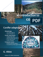 Conifers Powerpoint