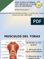 Musculos de la Region Costal del Torax