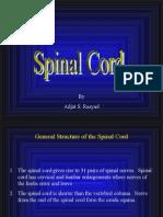 Spinal Cord Slides