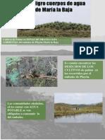 AGUA PALMA.pdf