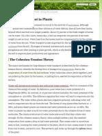 transpiration in plants pdf