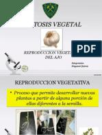 mitosisvegetal-130713123252-phpapp01.pptx