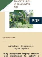 Agro Ecosystem