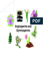gymnosperms and angiosperms info