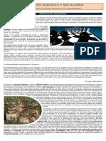 Orientación Dilemática vs Multilateral
