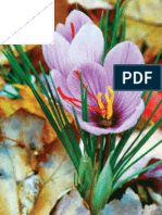 Effects of corm size and plant density on Saffron (Crocus sativus L.) yield and its components