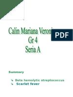 Beta Hemolytic Streptococcus