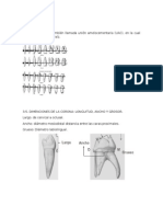 Anatomia Dental i