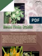 Machu Picchu Orchids