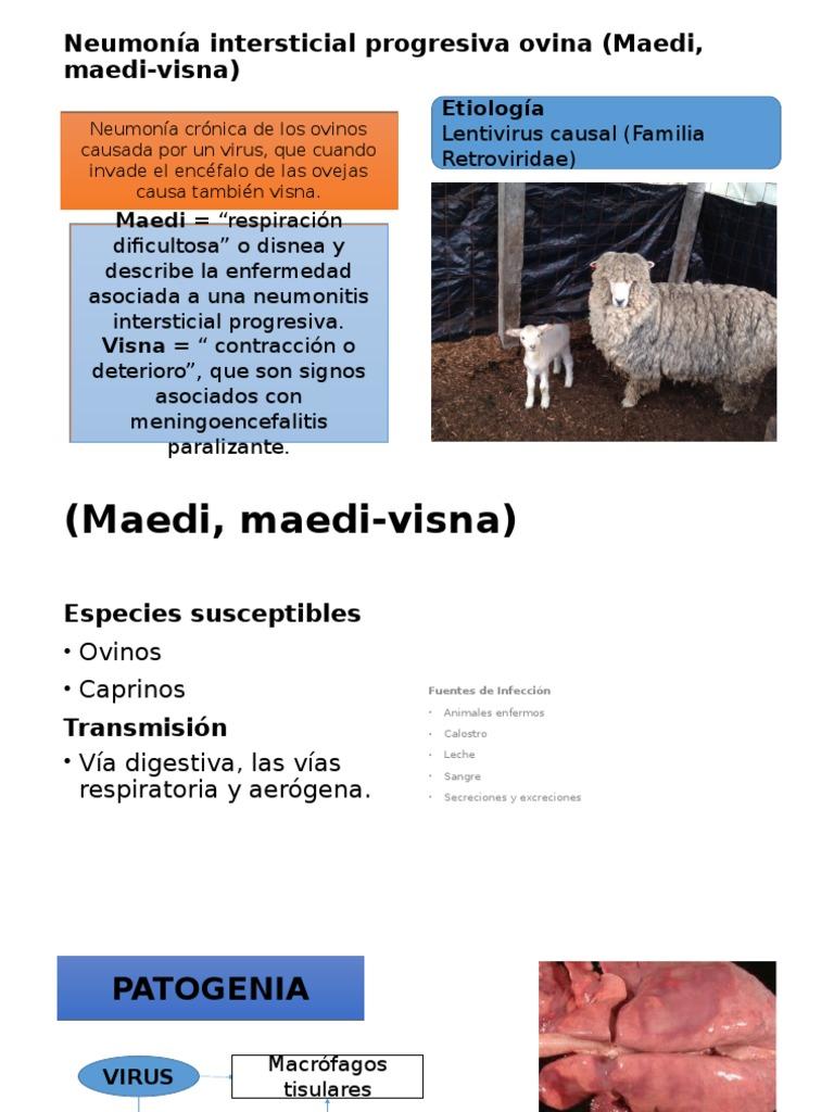 Neumonía Intersticial de Los Ovinos