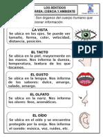 Fichas de Clase