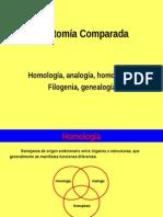 Homología Analogía