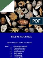 MOLUSKA UMUM