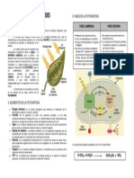 Fotosintesis Info