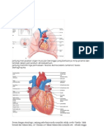 Anatomi jantung dk1