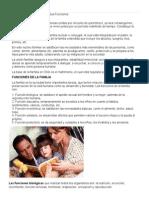 Funciones de La Familia Biologica Funcion Formativa