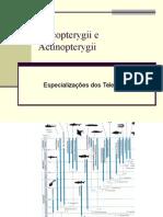 aula_7_Sarcopterygii (1)