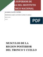 Musculos de La Region Posterior Del Tronco y Cuello