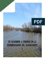 VEGETACIÓN DE LA DESEMBOCADURA DEL GUADALHORCE Nov Feb