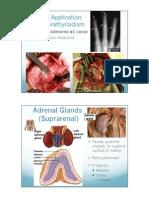 2402 Ch 17 Endocrine system (Part 3) PPT.pdf