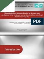studies morphologics and histologics of embriologyc development of prawns