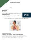 Resumo Anatomia y Fisio