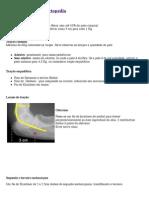 Tipos de Tração em Ortopedia