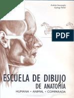 Dibujo de Anatomia