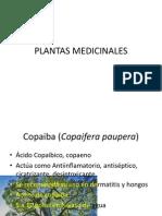 4553_plantas Medicinales 1