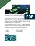 Virus, bacterias y otros hongos