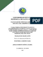Caracterización Molecular guanabana