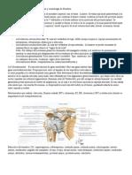 Anatomia y Semiología de Miembro Superior