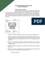 Anatomi Fisiologi Sistem Eksresi