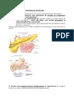 Pancreasul Endocrin C