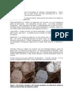 Catalogo Secciones Delgadas