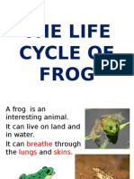 The Life Cycle of Frog