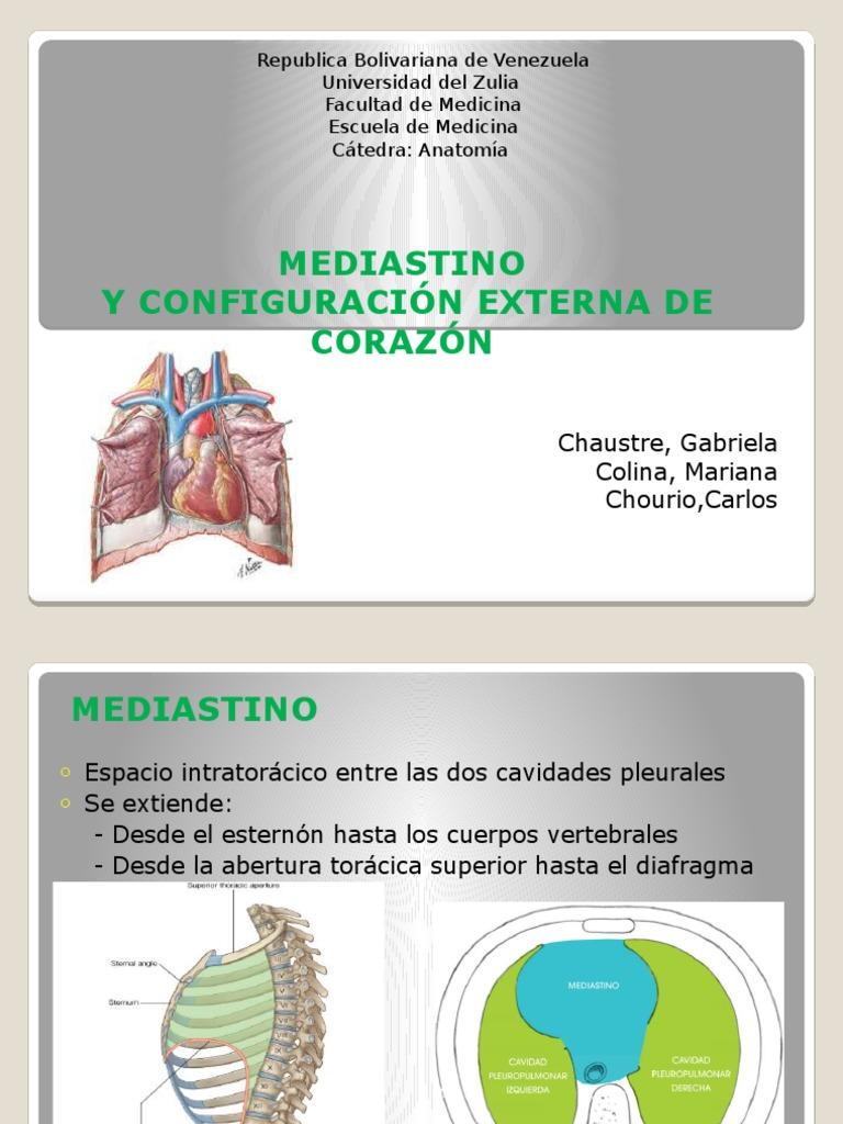 Mediastino y Corazón 1 - Grupo 5