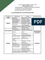02-Clasificacion de Las Articulaciones