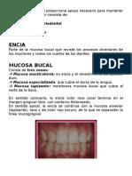 DRA HUACON WORD 3 SEMESTRE PERIODONCIA.docx