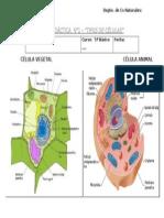 Guía tipos de células 5°