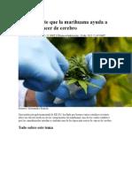 EE UU legaliza uso de marihuana en tumores cerebrales