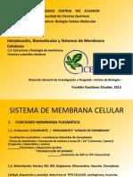 4. Membrana Celular